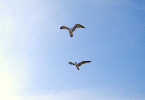 чайки на плажа в обзор