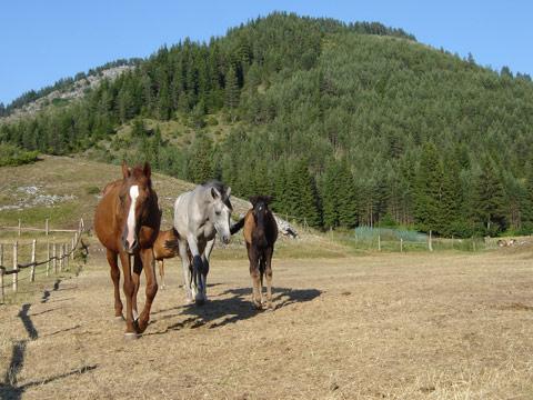 коне от конната база в триград